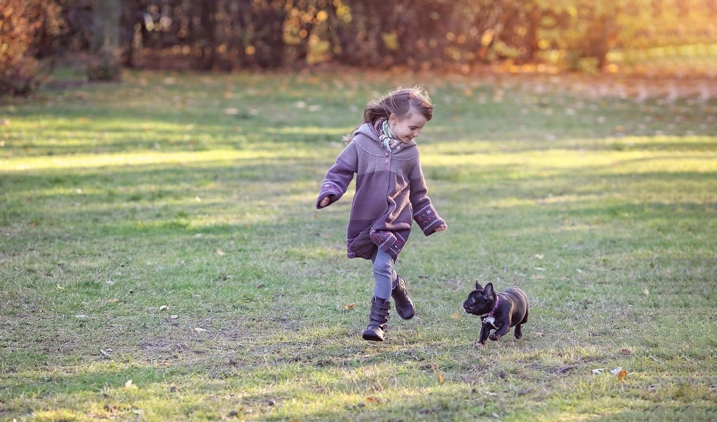 Are French Bulldogs Good With Kids?- Learn Today