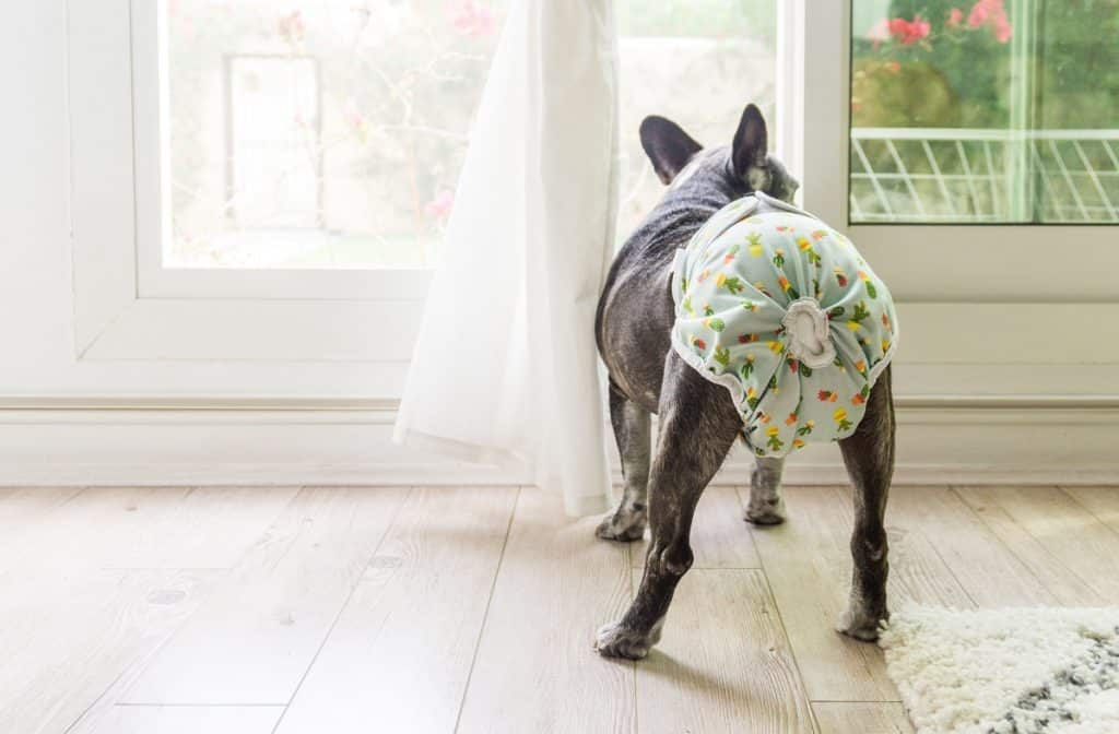 Best Frenchie Diapers - Our Top 5