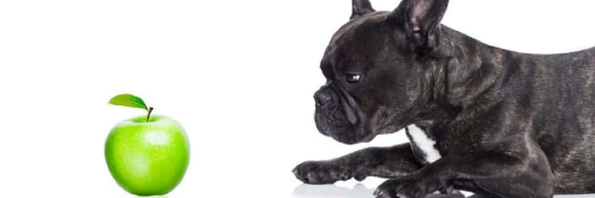 Is Apple good for French bulldogs?