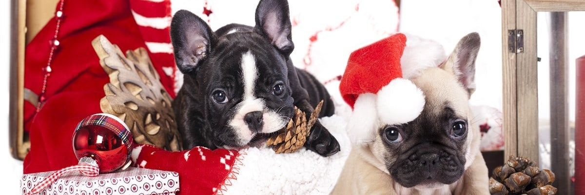 French Bulldog Christmas Shopping - Our Picks