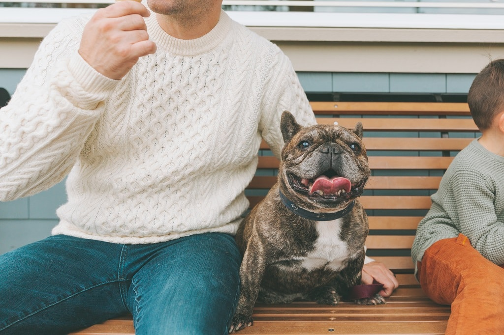How Much is a Brindle French Bulldog?